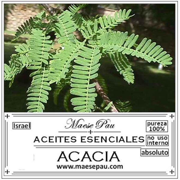 Absoluto de Acacia Dulce
