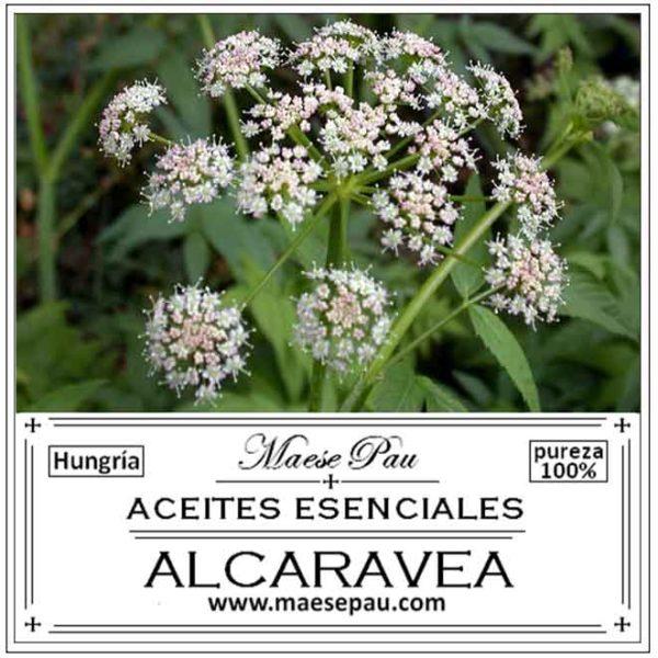 Aceite Esencial de Alcaravea
