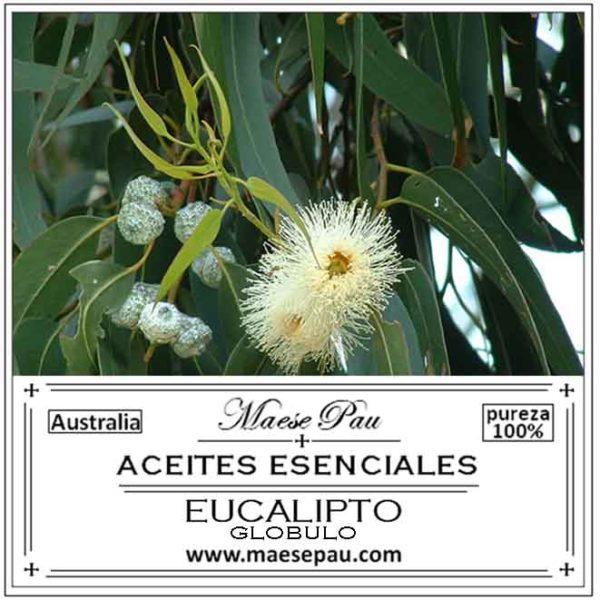 Aceite Esencial de Eucalipto Glóbulo Ayuda a prevenir y a tratar gripes, resfriados y epidemias virales.