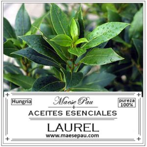 Aceite Esencial de Laurel, Antibacteriano, antifúngico, antiviral