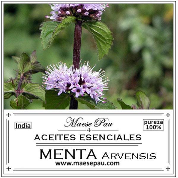 aceite esencial de menta arvensis