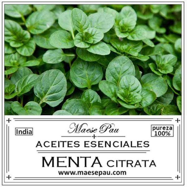 Aceite Esencial de Menta Citrata