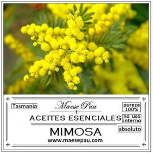 absoluto de mimosa para perfumes niche