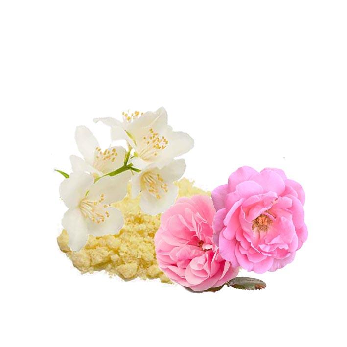 Absolutos para Perfumería
