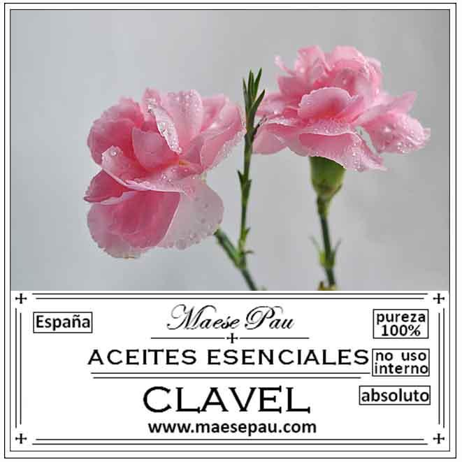 Absoluto de Clavel