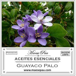 Aceite Esencial de Guayaco Palo