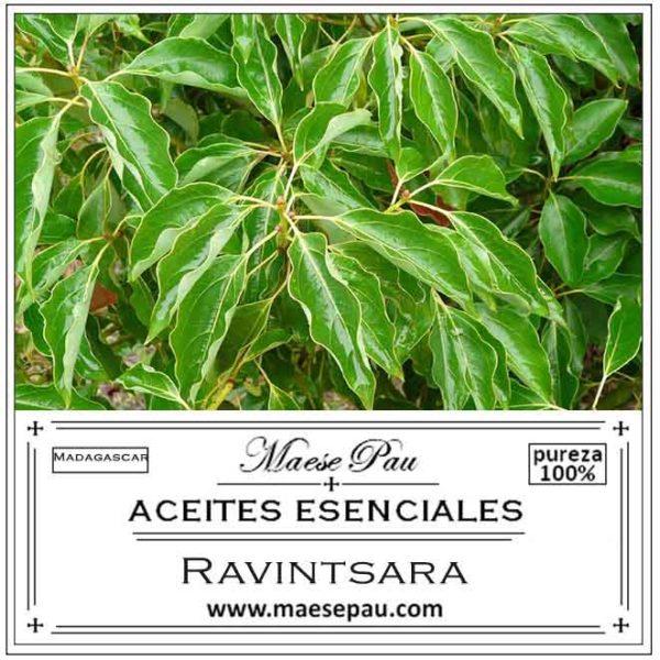 Aceite Esencial de Ravintsara