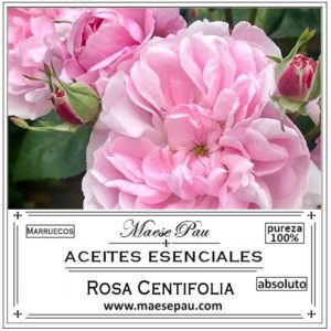 Absoluto de Rosa Centifolia