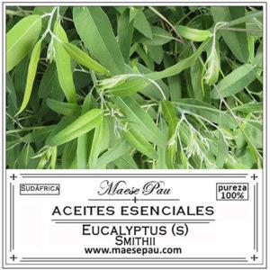 aceite esencial de eucalipto smithii