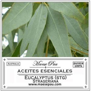 aceite esencial de eucalipto strageriana