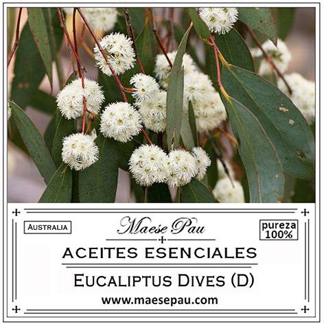 aceite esencial de eucalipto dives