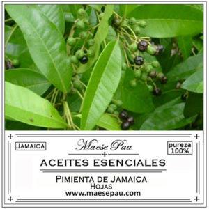 aceite esencial de pimienta de jamaica hojas