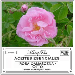 aceite esencial de rosa damascena otto bulgaria