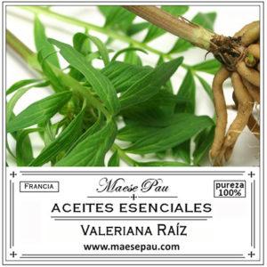 aceite esencial de valeriana raiz