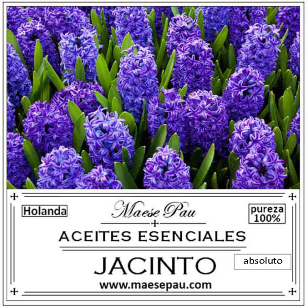 absoluto de jacinto para perfumería