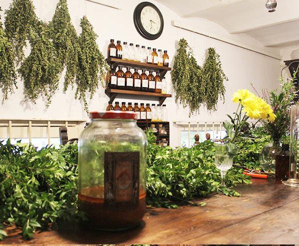 aprender a destilar plantas medicinales