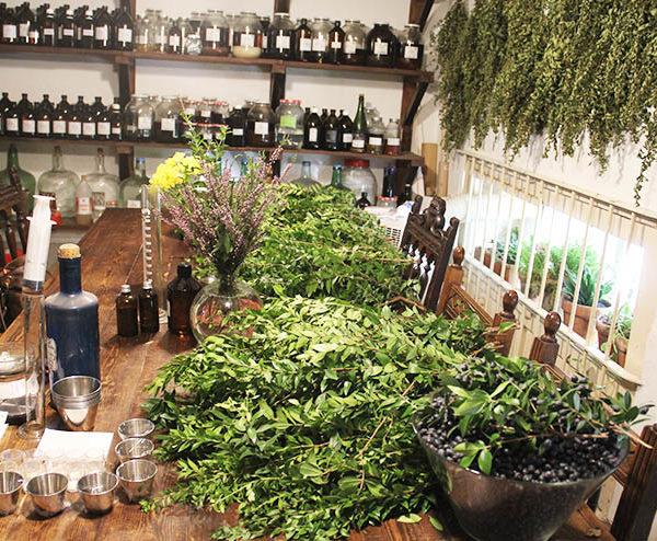 curso para aprender a usar las plantas en fitoterapia