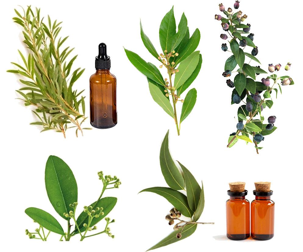 los mejores aceites esenciales antigripales antivirósicos
