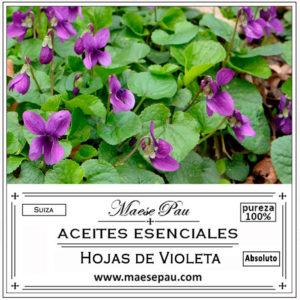 absoluto de violeta hojas